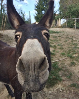 Gina the Donkey from the donkey metaphor about why people's judgments don't matter because people will always judge