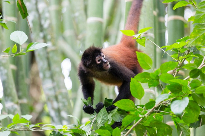 Manuel Antonio National Park Costa Rica Valentina Rose Blog Travel