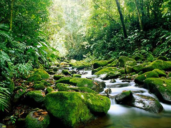 carara National Park Costa Rica Travel Valentina Rose Blog