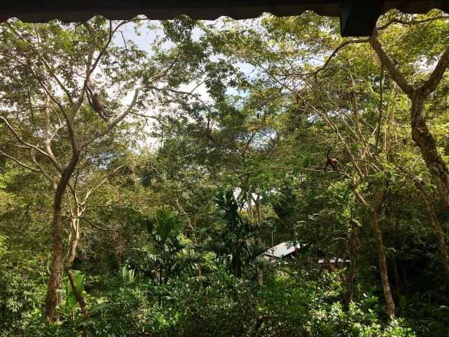 Costa Rica Monkeys Valentina Rose Blog