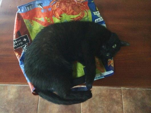 Costa Rican Jugle Cat Valentina Rose Blog