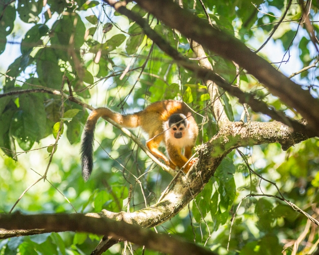 How to Return Back to Normal Life After your Costa Rica Yoga Cute Monkey on a Branch