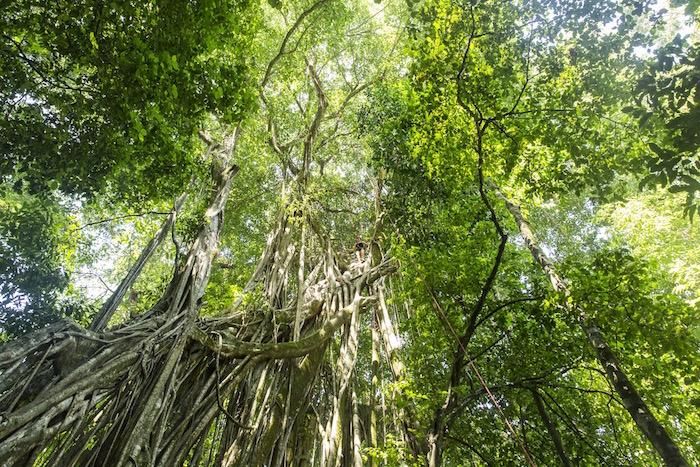 10-things-to-do-in-matapalo-osa-peninsula-costa-rica-valentina-rose-blog-tree-climbing