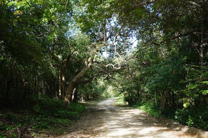 Jungle Road Panama Happy New You! 2017 Cambutal Sansara Yoga and Spa 1.jpg