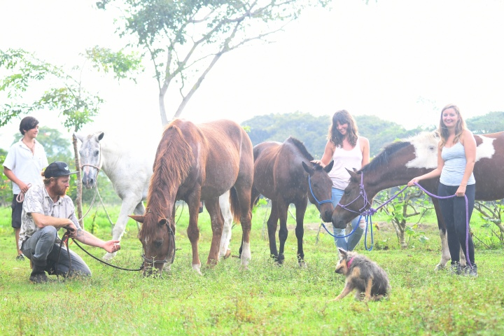 Horse Therapy Experience For Happy New You! New Year's Eve Yoga Retreat On The Osa Peninsula Of Costa Rica