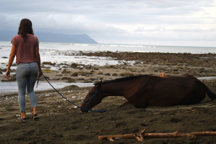 Horse Therapy Costa Rica Osa Peninsula New Year's Eve Yoga Retreat Horse Lying Down
