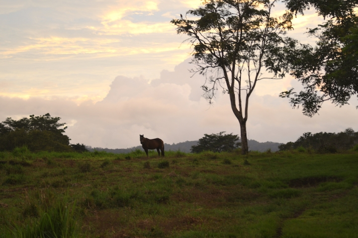 Horse Therapy Costa Rica Osa Peninsula New Year's Eve Yoga Retreat Sunset